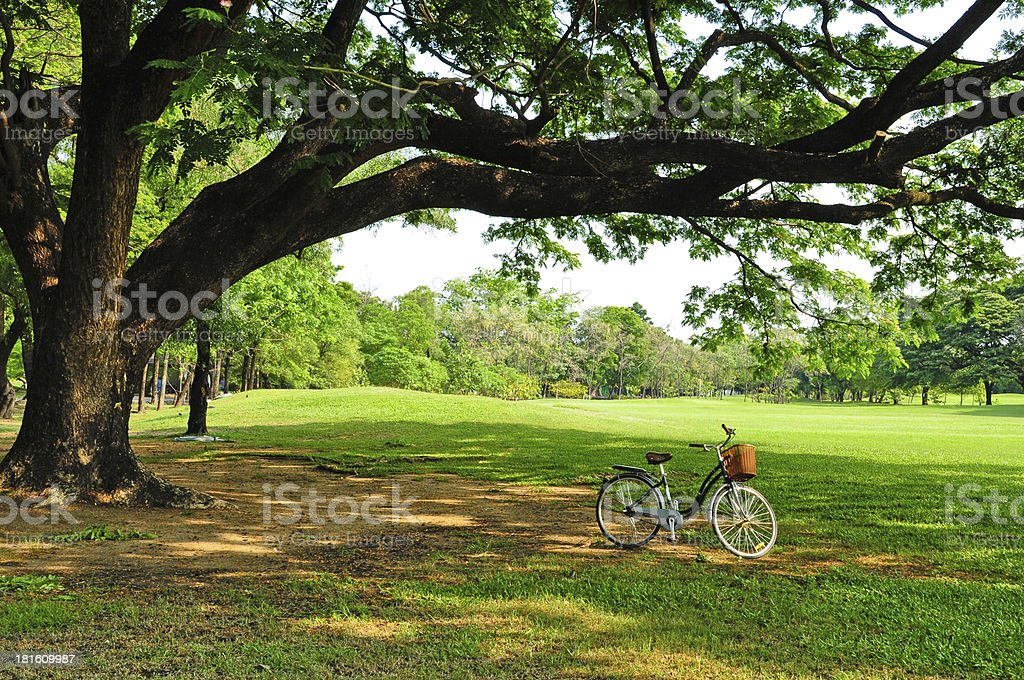 bicycle on green grass under Big tree royalty-free stock photo