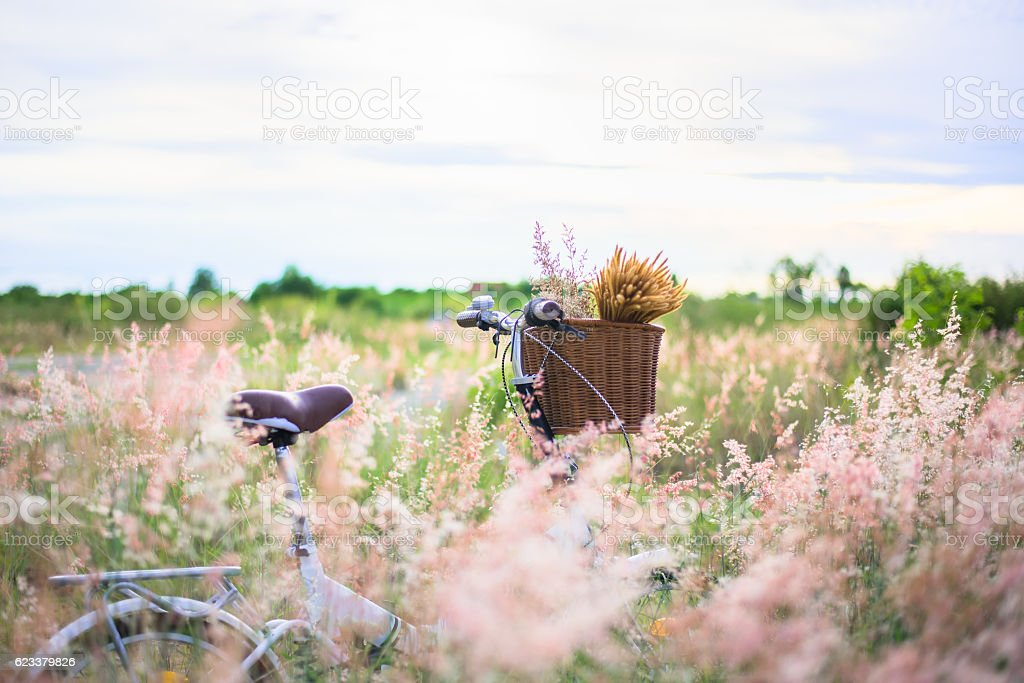 Bicycle with basket and guitar of flowers in meadow stock photo