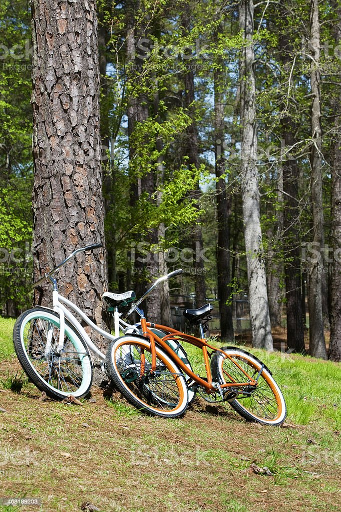 Bicycles Against a Tree in Fort Yargo State Park royalty-free stock photo