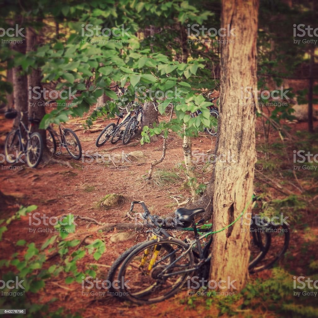 Bicycles Parked, Forest Woods, Jordan Pond, Acadia National Park, Maine stock photo