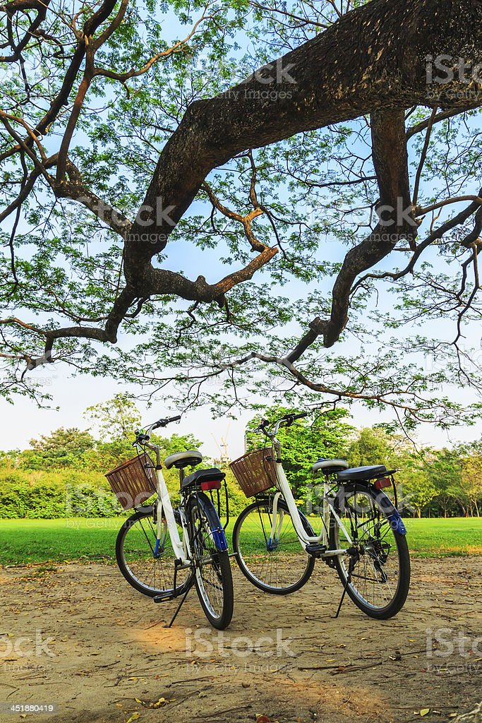 Biciclette in grande albero nel parco foto stock royalty-free