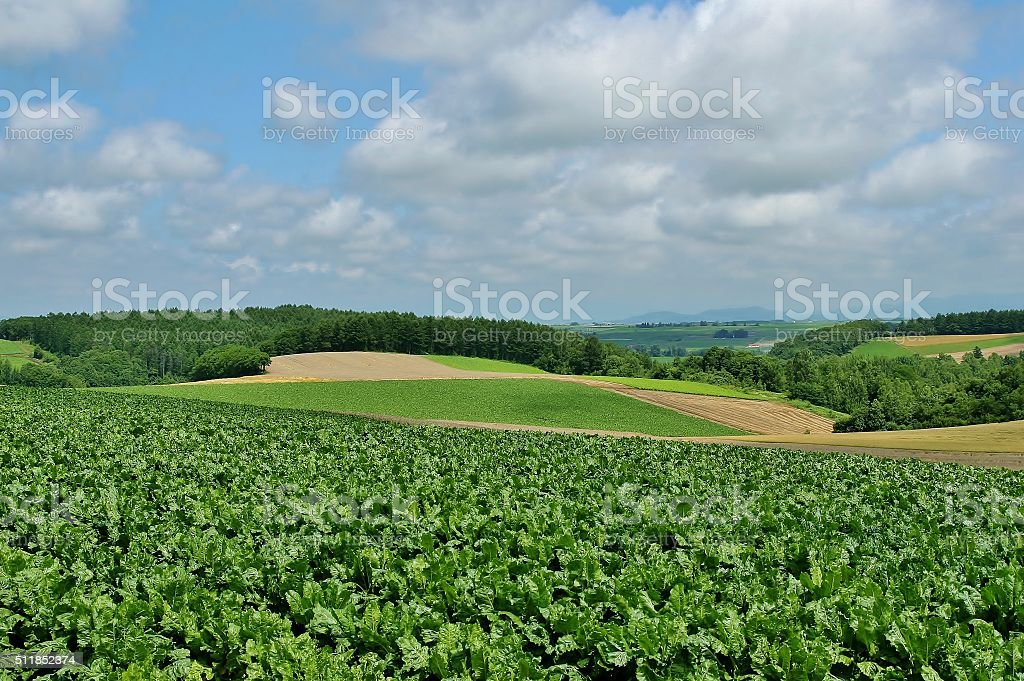 Biei beautiful Patchwork Road in hokkaido stock photo