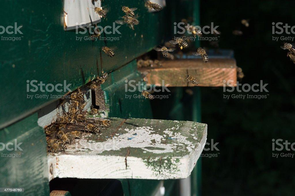 Bienen am Bienenstock royalty-free stock photo