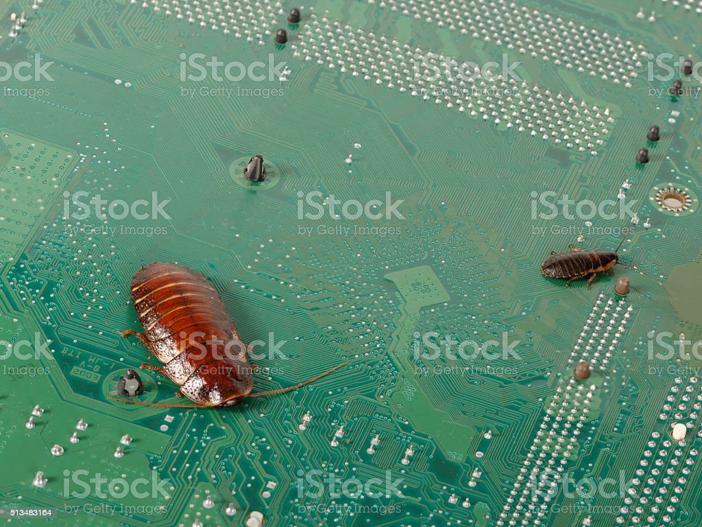 big and small cockroachs on the  computer microcircuits. stock photo