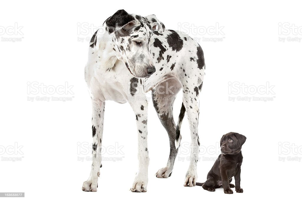 Big and Small Dog stock photo
