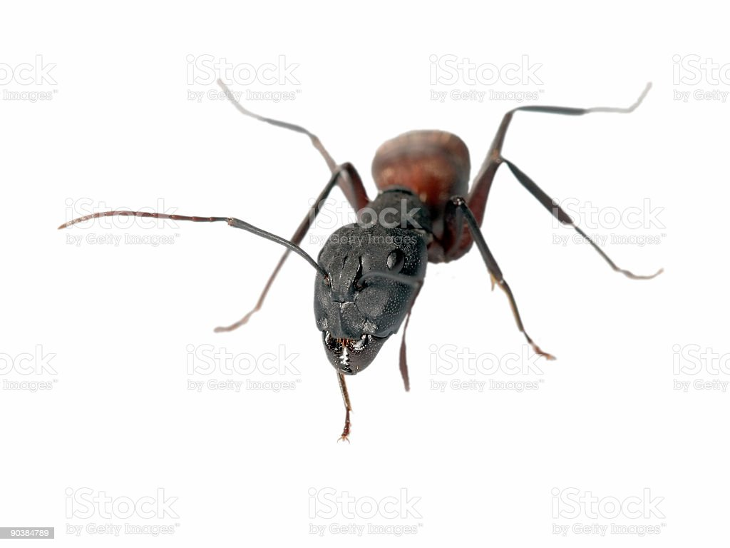 Big ant 08 stock photo
