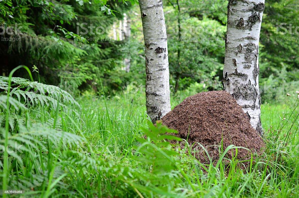 Big ant hill stock photo