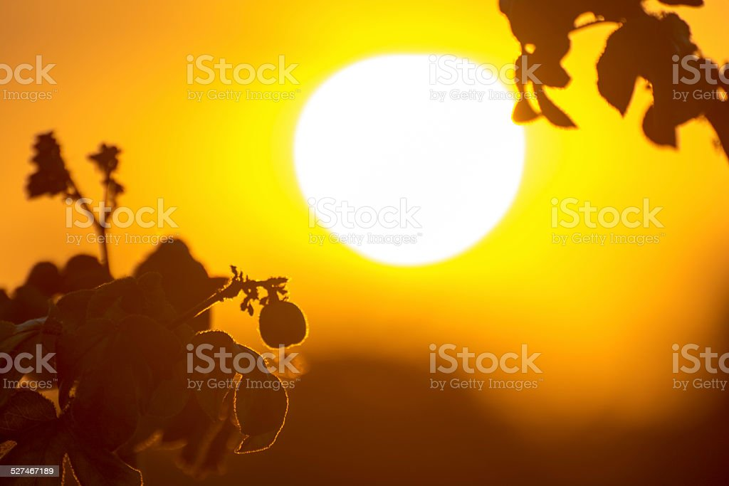 Big Ball (Sunset) royalty-free stock photo