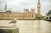 Big Ben and the Seagull