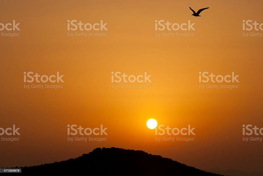 Big bird small sun sunset stock photo