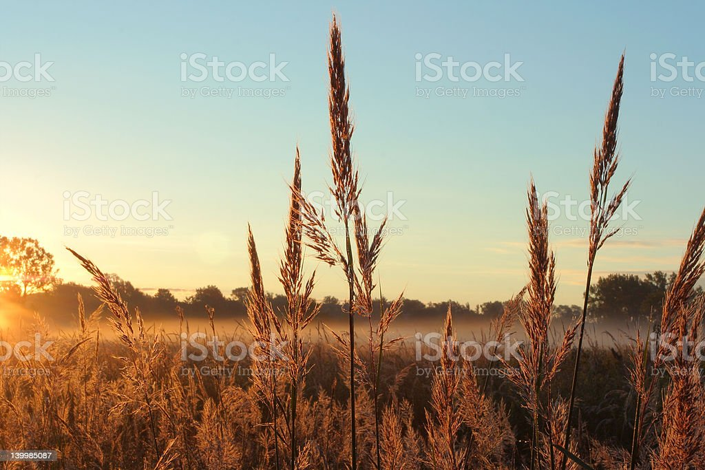 Big Bluestem Prairie Grass stock photo