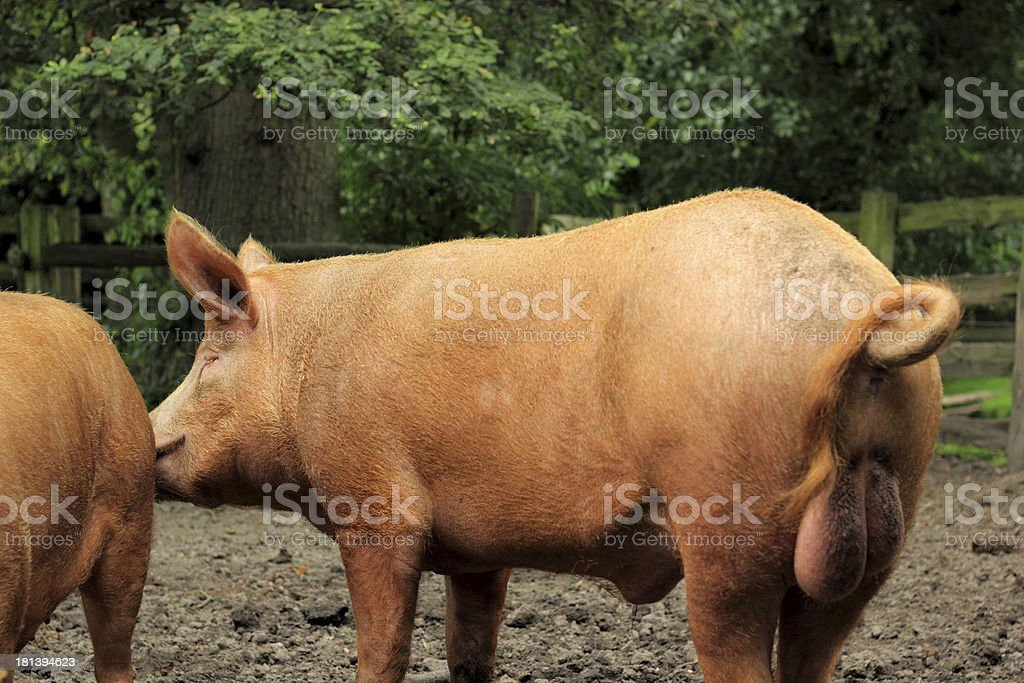 Big boy stock photo