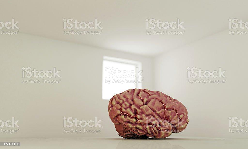 big brain stock photo