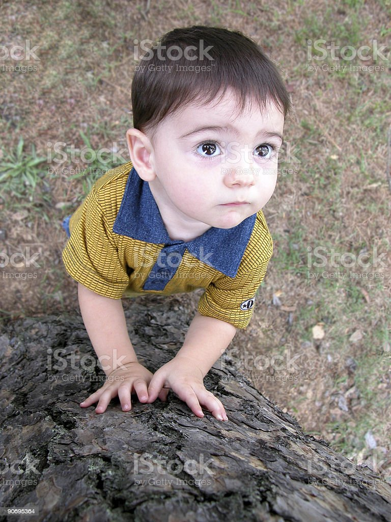 Big Bright Eyes Searching a Tree royalty-free stock photo