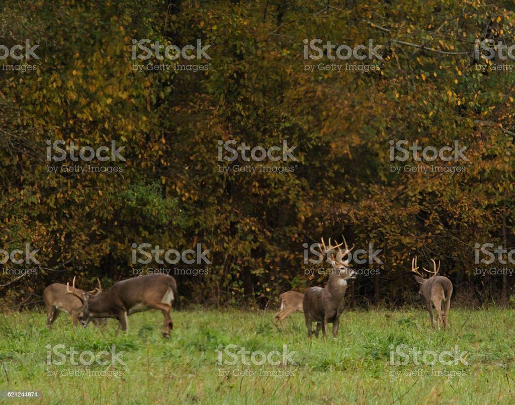 Big Bucks stock photo