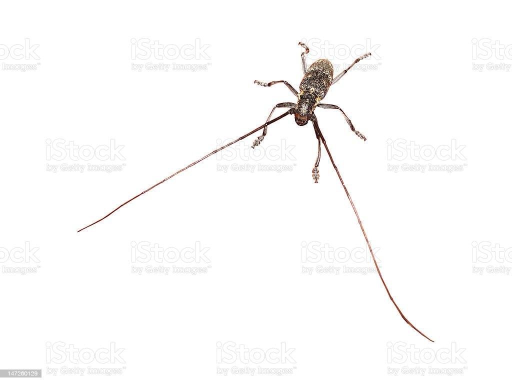 Big Bug, isolated royalty-free stock photo