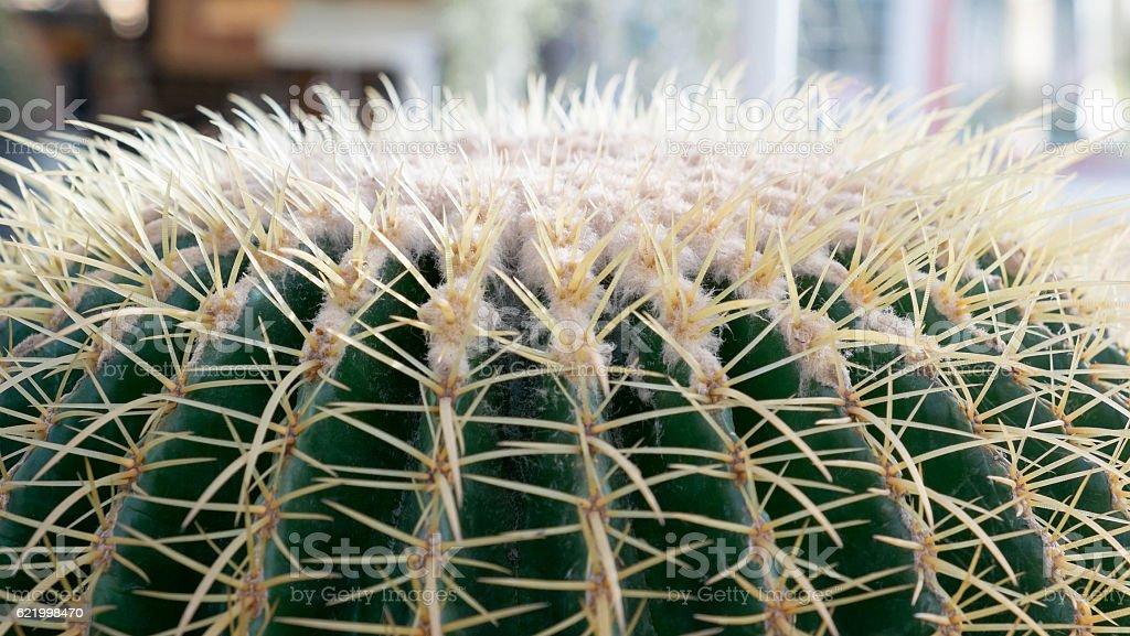Big cactus Lizenzfreies stock-foto