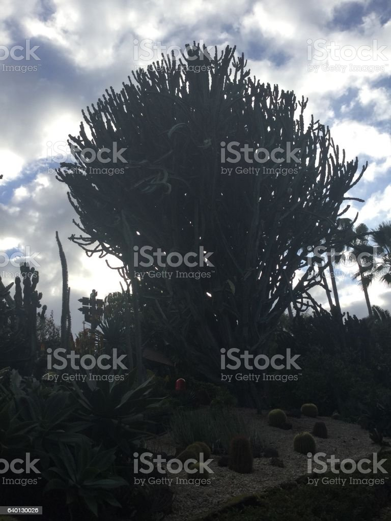 Big cactus stock photo