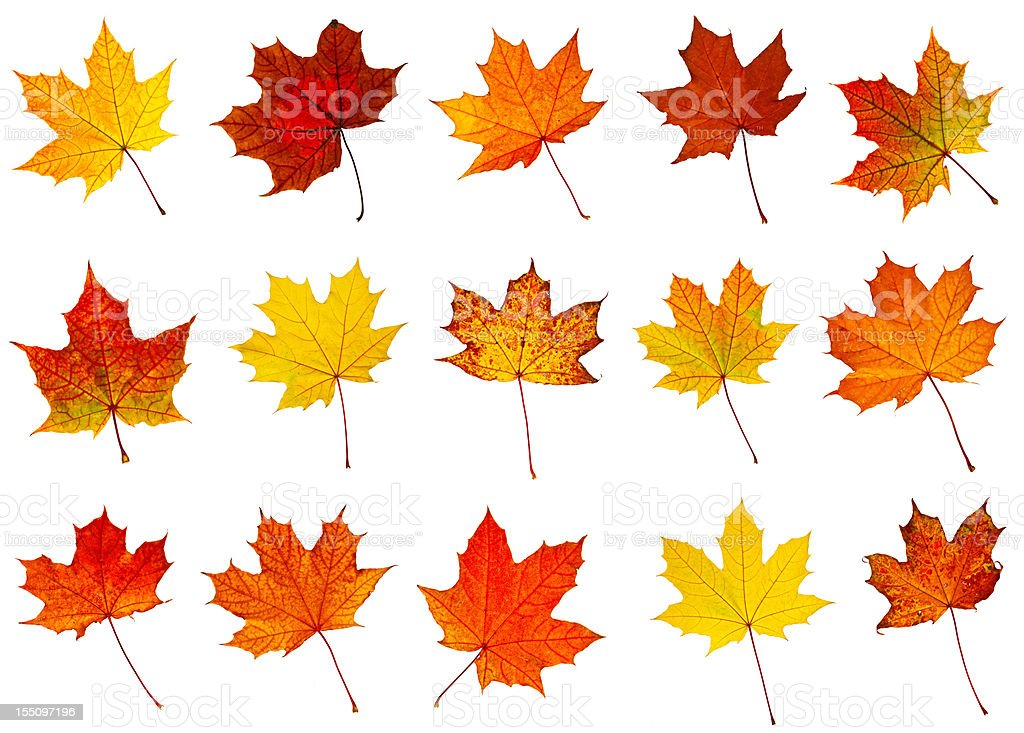 big collection of autumnal leaf stock photo