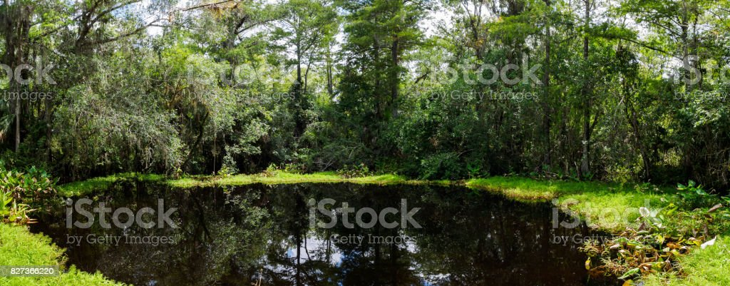Big Cypress Bend Boardwalk stock photo