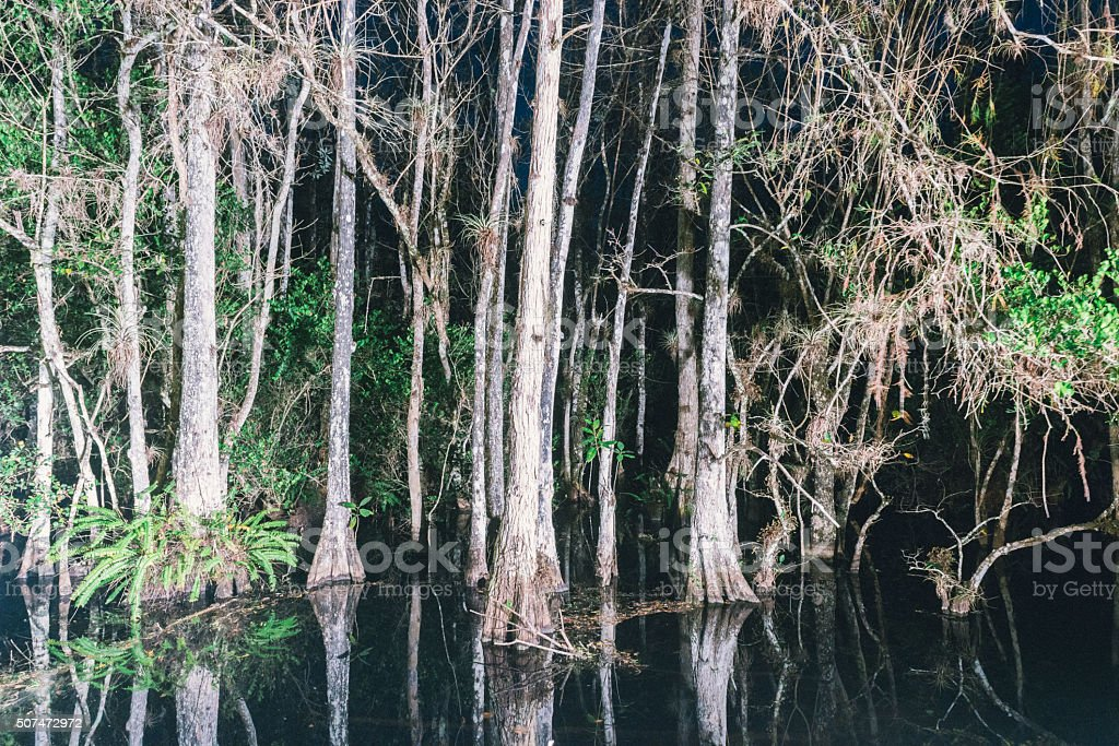 Big Cypress National Park Swamp Night in the Everglades stock photo