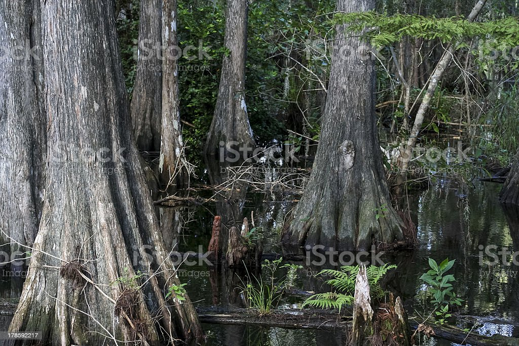 Big Cypress National Preserve in Florida, USA royalty-free stock photo