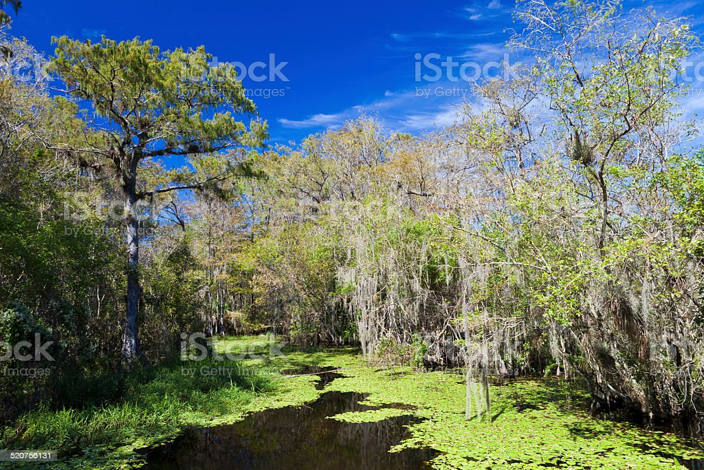 Big Cypress National Preserve stock photo