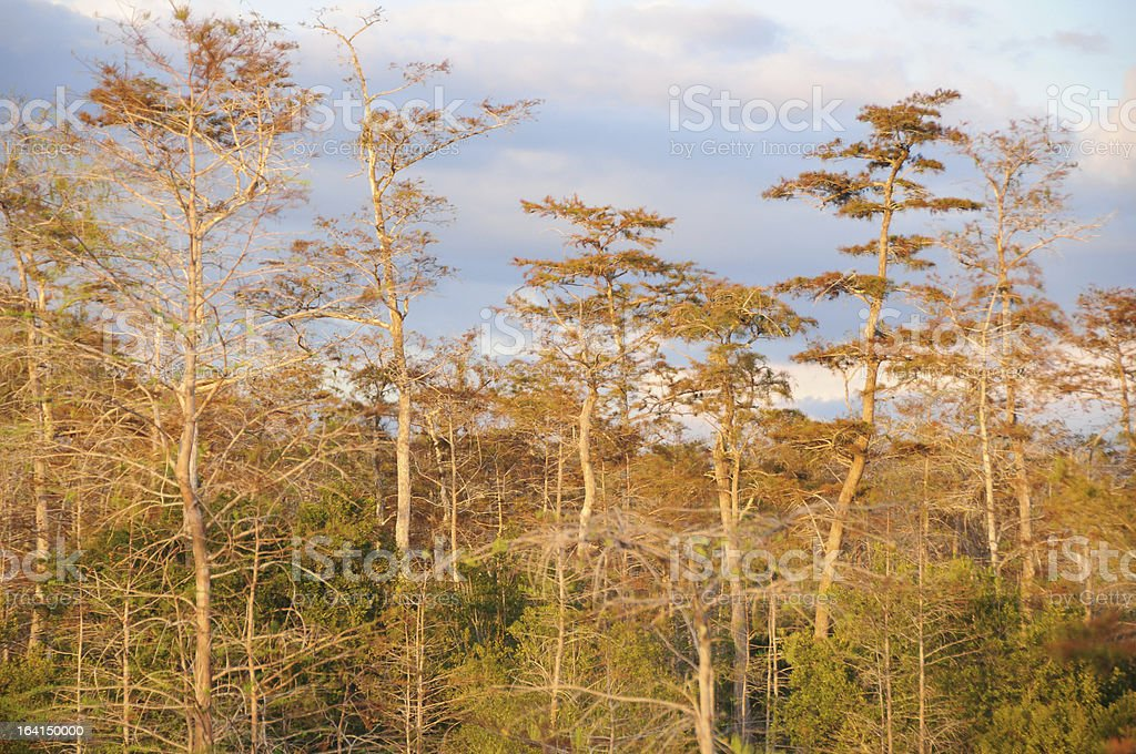 Big Cypress Swamp National Preserve, Southern Florida royalty-free stock photo