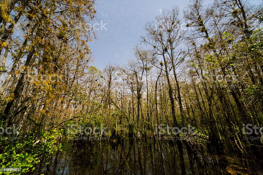 Big Cypress Trees National Park Nature Landscape Loop Road Florida stock photo