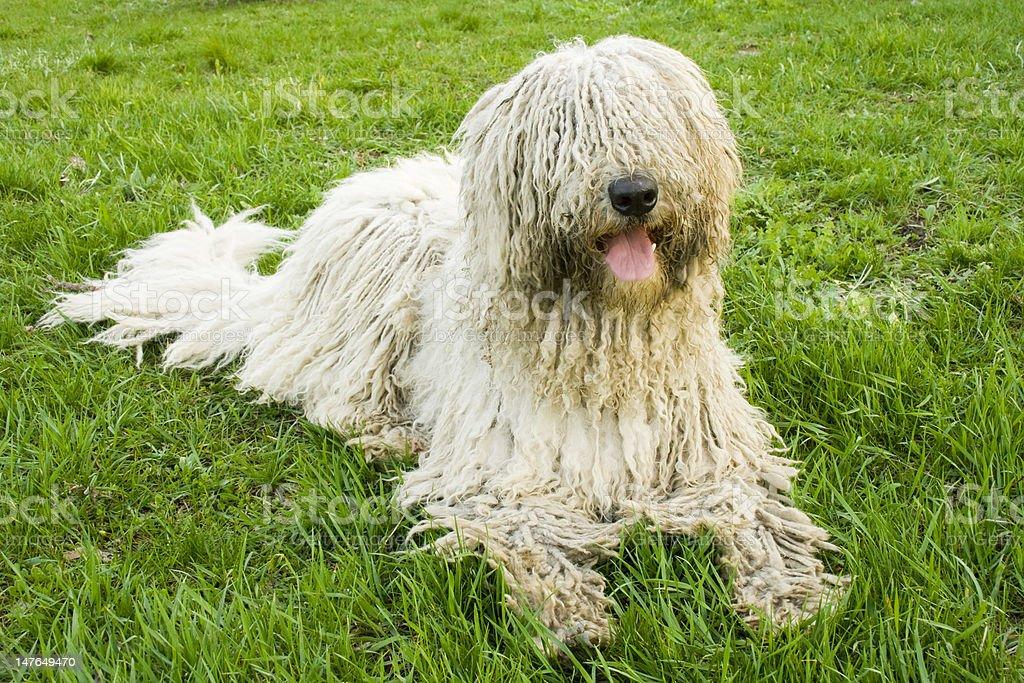 big dog Lizenzfreies stock-foto
