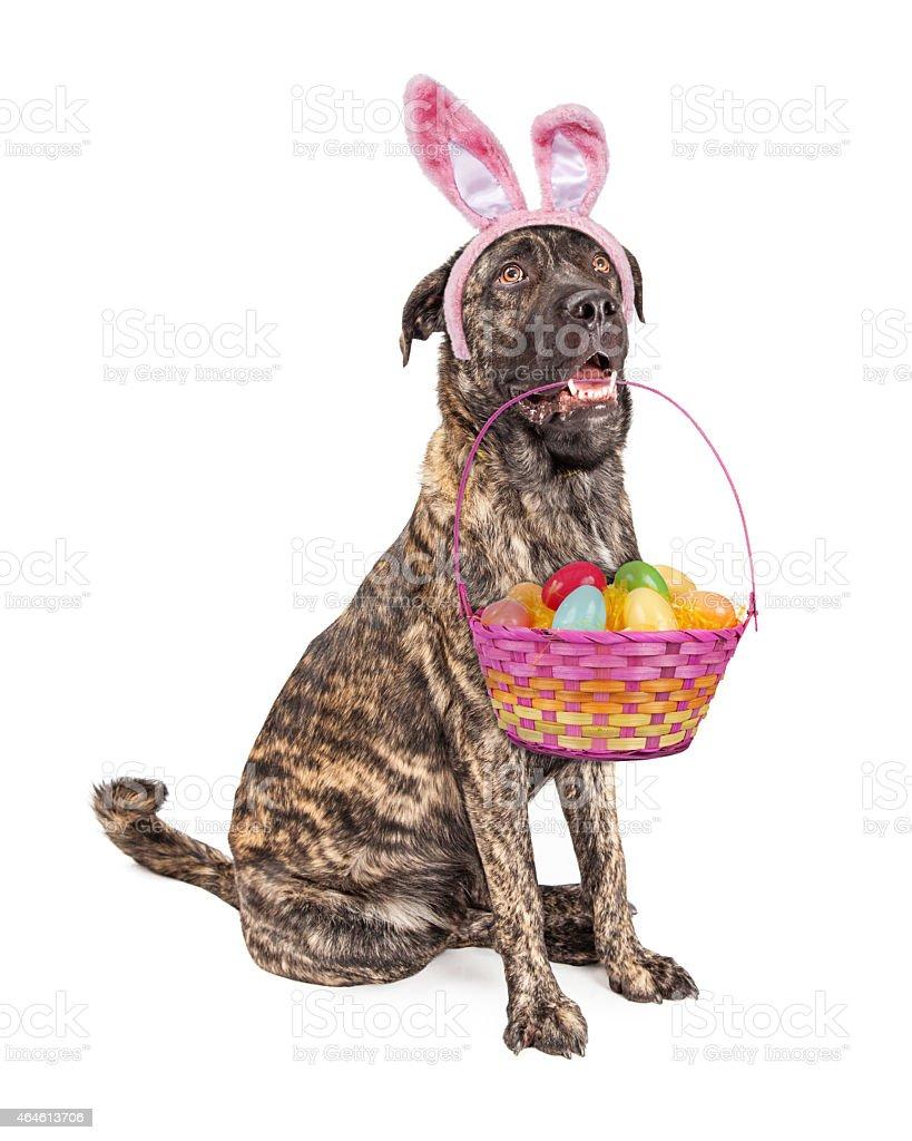 Big Easter Bunny Dog stock photo