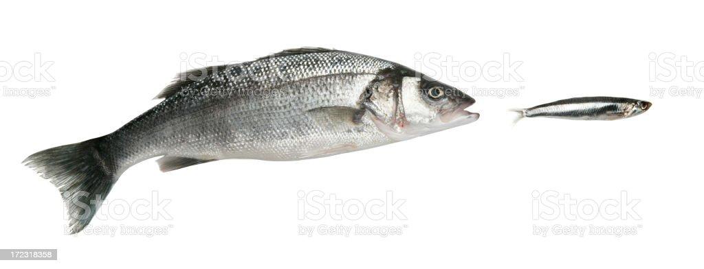 Big eats small stock photo