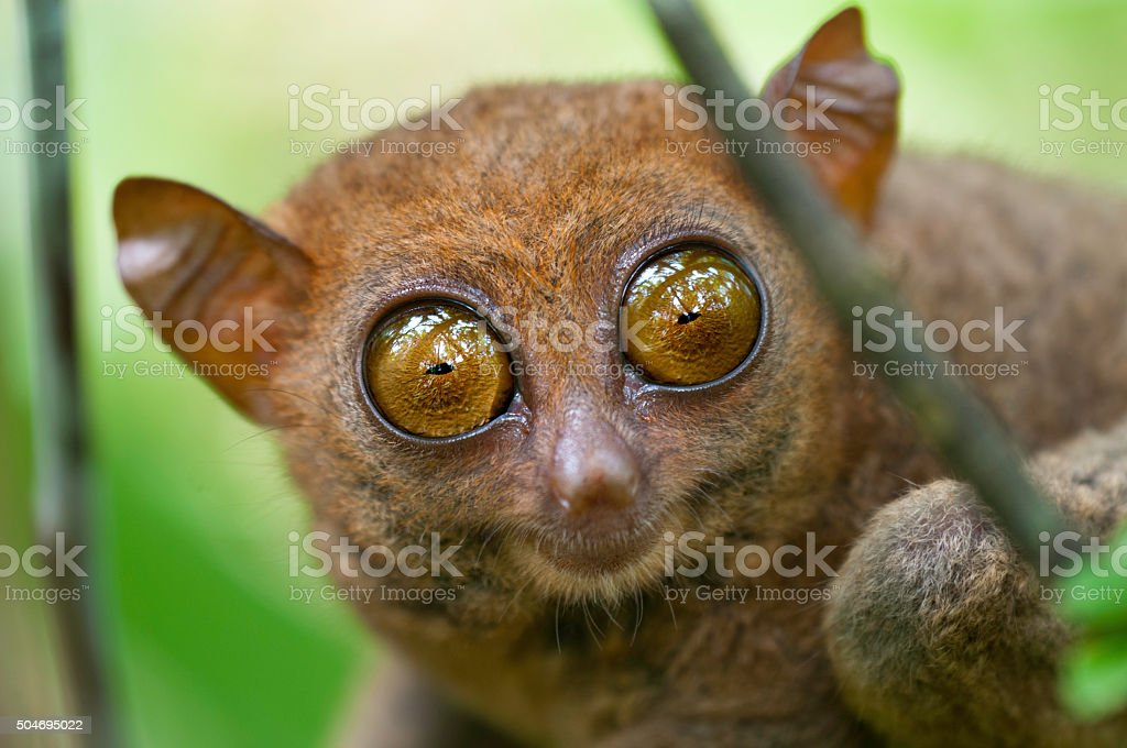 Big Eyes stock photo