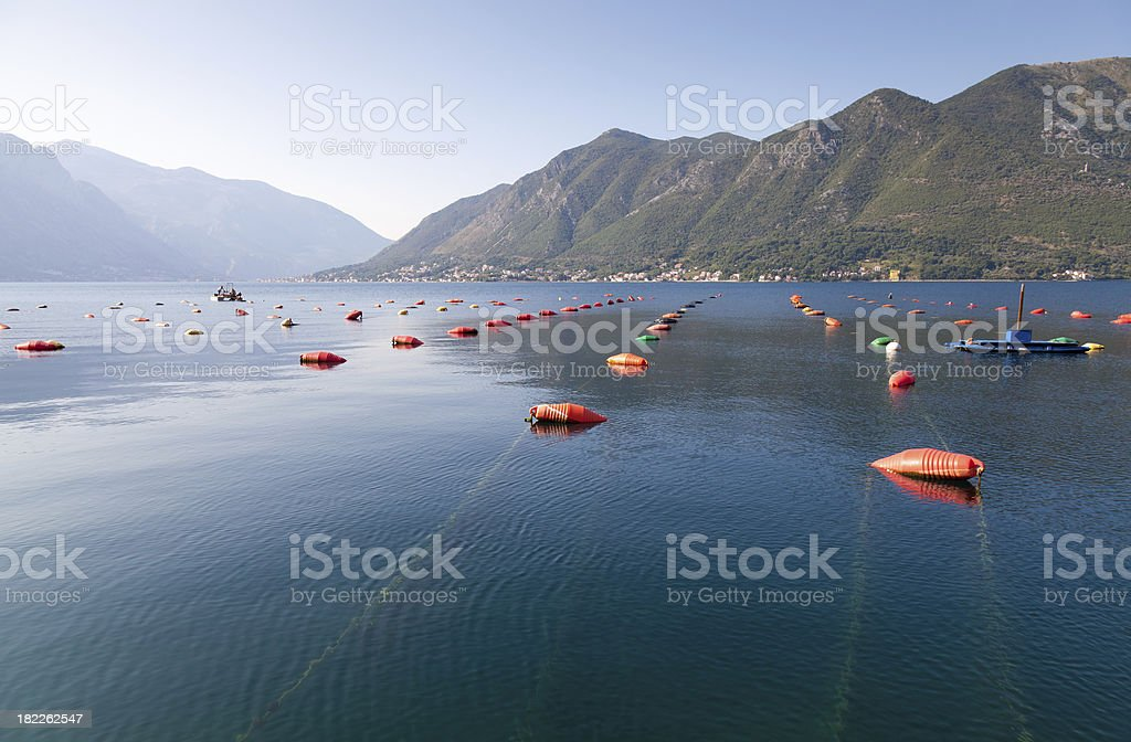 Big farm for growing mussels, Adriatic sea, Montenegro stock photo
