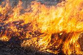 Big fire in the field