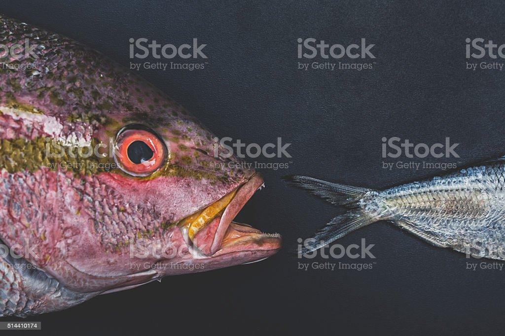 Big Fish Eats Little Fish stock photo