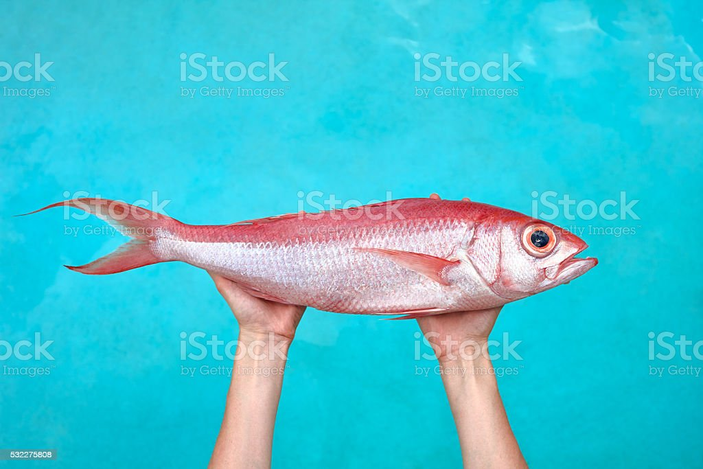 Big fish in hands stock photo