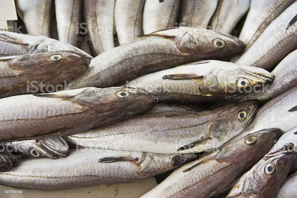 big fresh haddock fishes stock photo