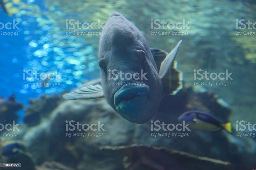 Big funny fish stock photo