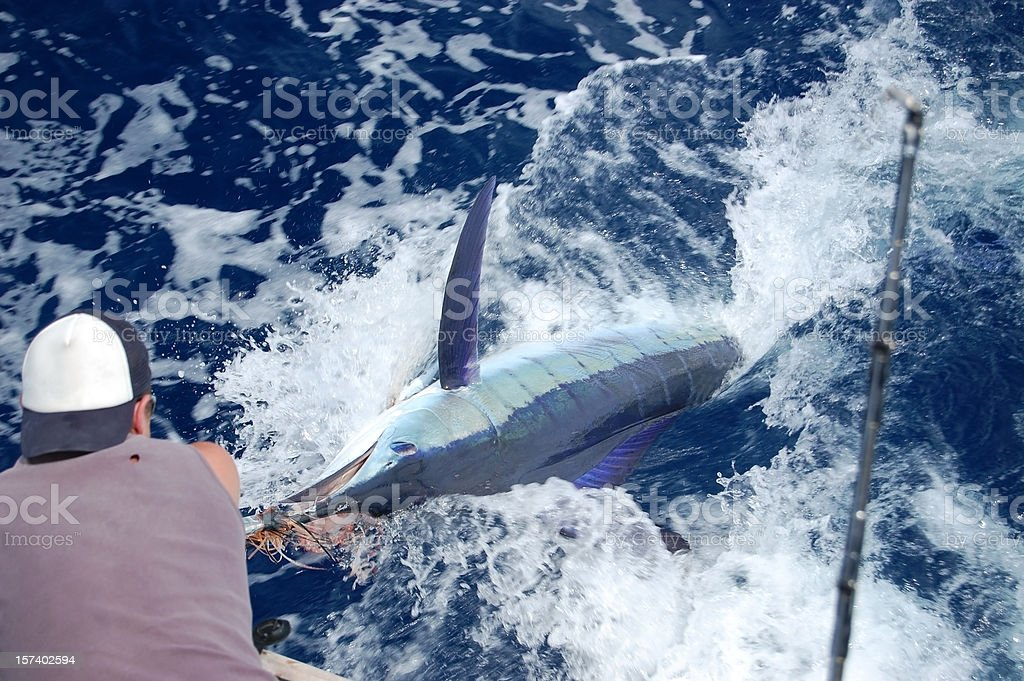Big Game Fishing royalty-free stock photo