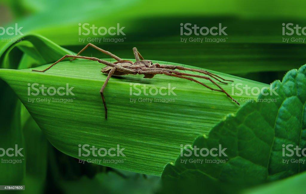 big gray spider royalty-free stock photo