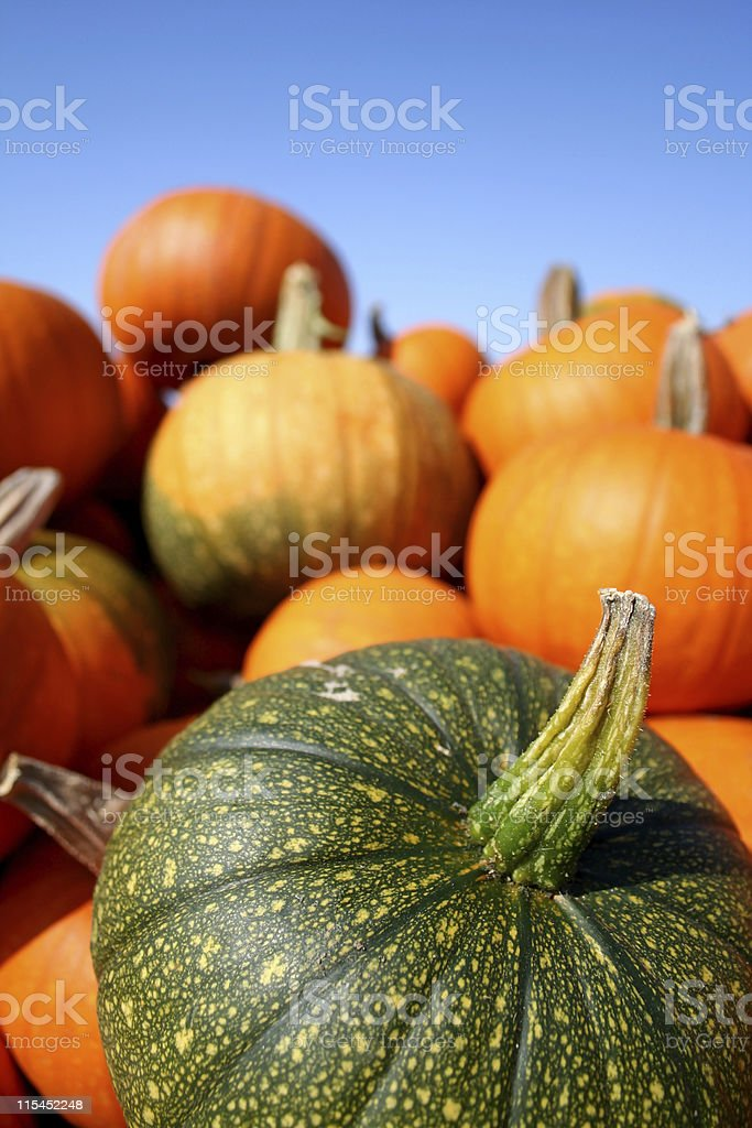 Big Green pumpkin in a pile. royalty-free stock photo