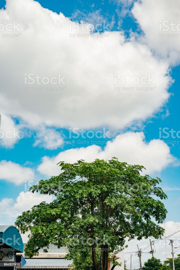 Big green tree and clear blue sky stock photo