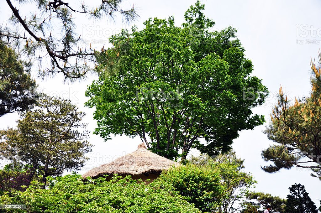 Big & Green Tree over Lookout Hut stock photo