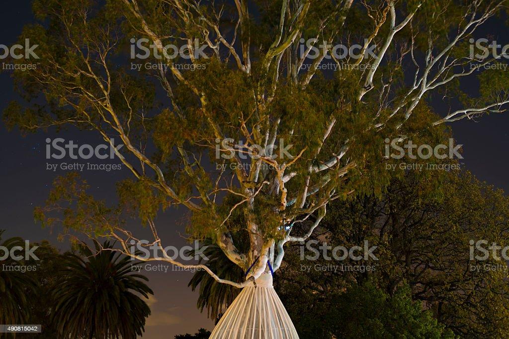 big gum tree at night stock photo