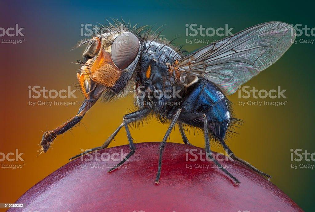 Big head fly on the grape stock photo