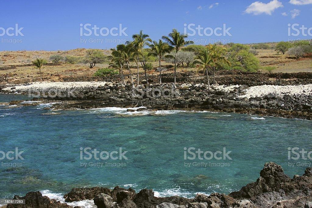 Big Island Hawaii Palm tree ocean scenic stock photo