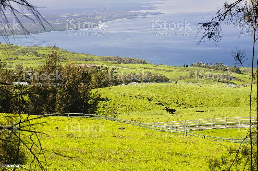 Big Island landscape, Hawaii stock photo