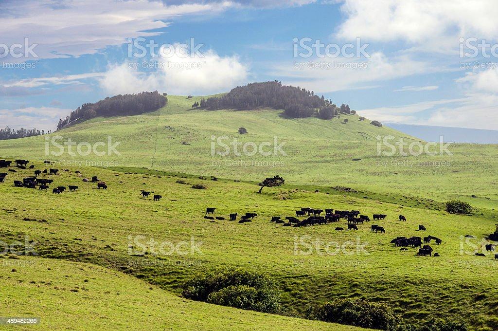 Big island ranch stock photo