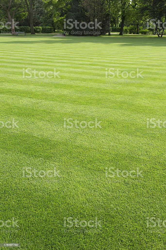 big lawn in the park royalty-free stock photo